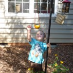 Green Hour Craft Project:  Bio-degradable Bird Feeder!