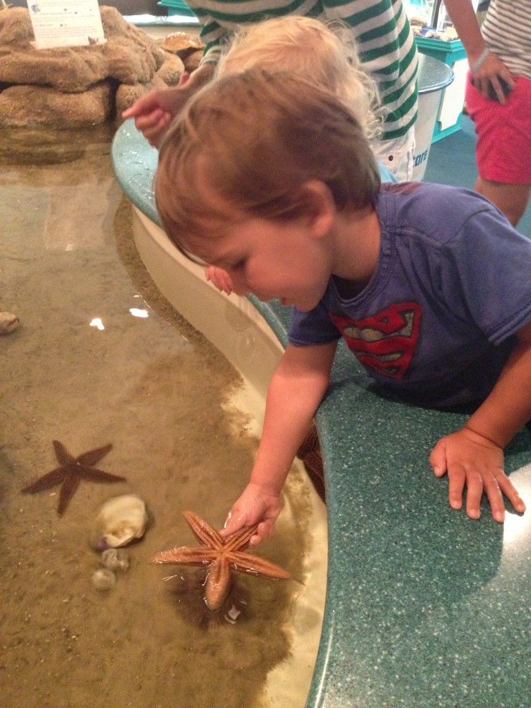 The touch tank at the Ocean Isle Museum made for great drizzly morning fun!