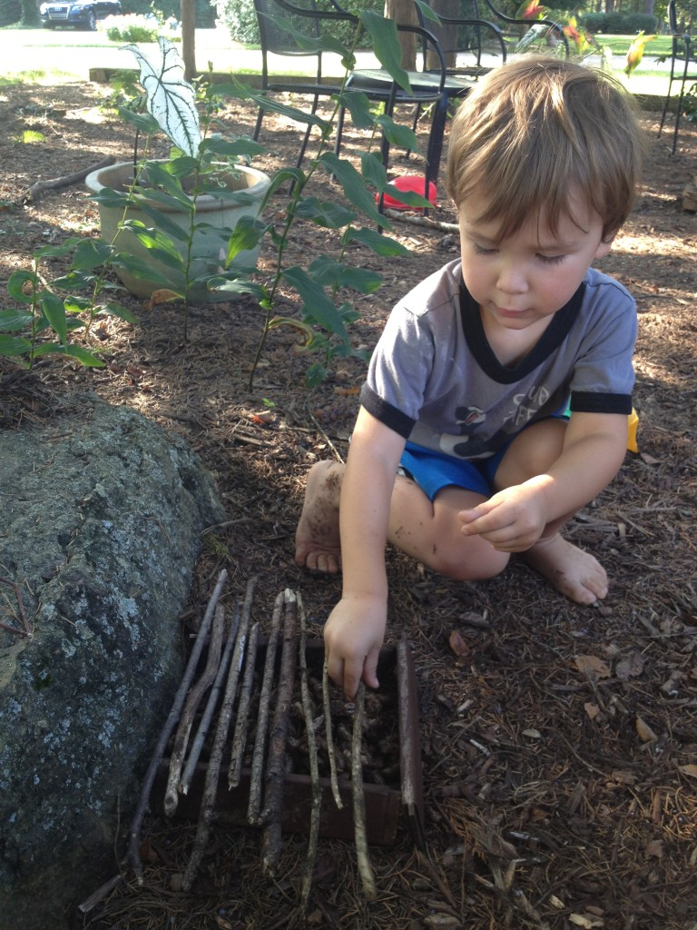 "Building a ""cicada house."""