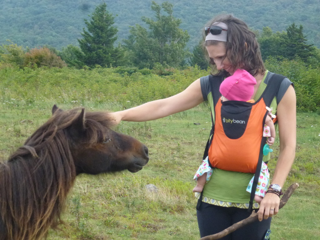 Checkin' out the wild ponies at Grayson Highlands!