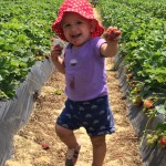 From Farm to Table – Strawberry Season!
