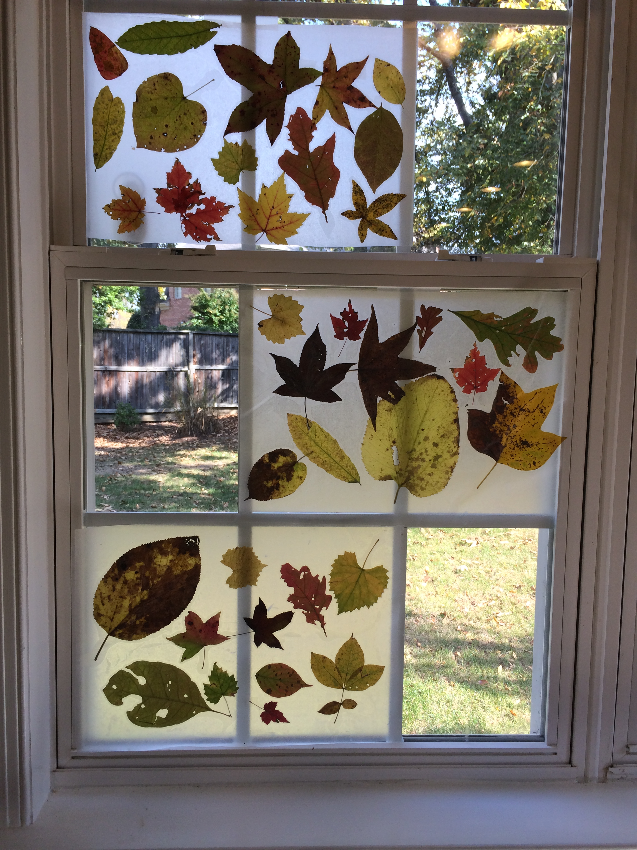 Fall craft project leaf placemats and window decor for Autumn window decoration